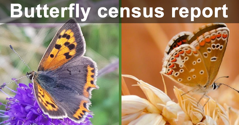 Butterfly census report