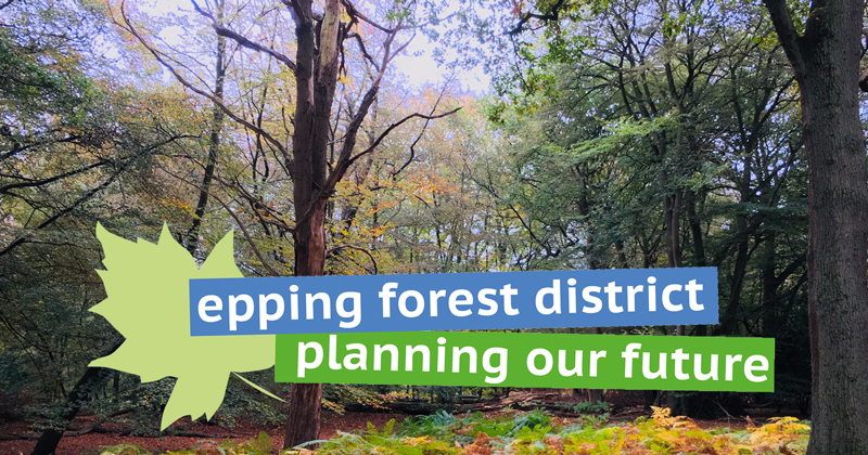 Epping Forest trees - planning our future