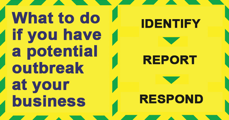 What to do if you have a potential outbreak at your business - Identify - Report - Respond