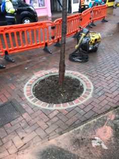 Tree pits repaired and new trees