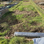 Patchy turf at Wheelers Farm allotments